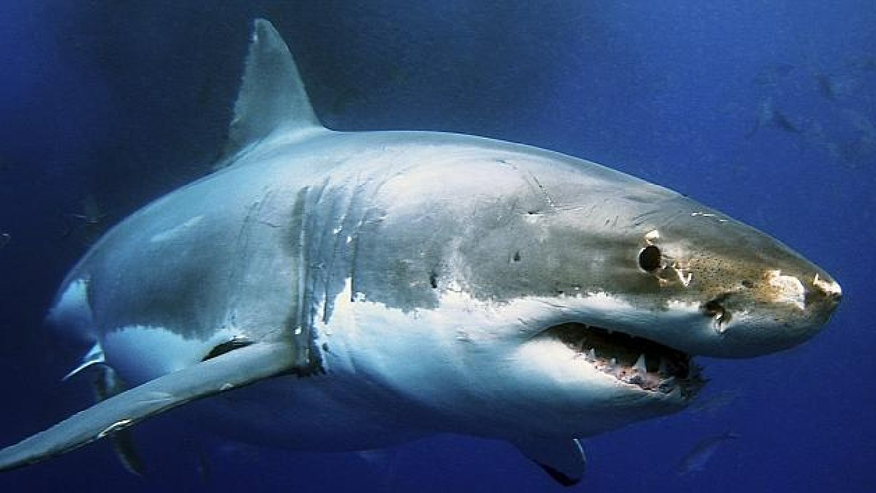 It's not known what type of shark was involved in the attack. Picture: Thinkstock file photo