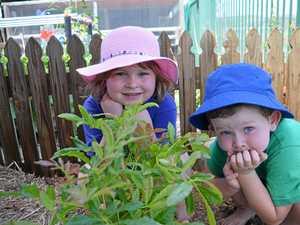Bush tucker garden tells kindy kids of land's roots