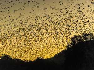 Big Bat Festival joins global campaign