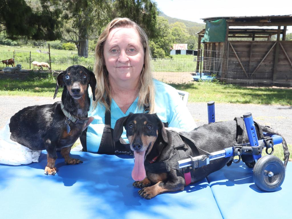 File photo: Lisa-Jayne Cameron of Storybook Farm-Sacred Animal Garden has defended allegations following a raid by the RSPCA where 37 disabled and injured animals were seized from her rented Whiteside home. Ms Cameron said her family has now received numerous threats and she feared for her family. She started Storybook Farm in 2012 and it had become a haven for special-needs animals. She is pictu