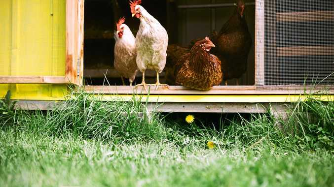 The popularity of backyard chickens and vegetable gardens are seemingly on the rise.