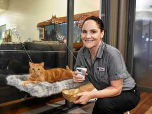 'Purring' coffee with rescue cats
