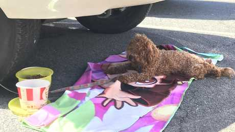 The dog was one of four abandoned by owners in the car park.