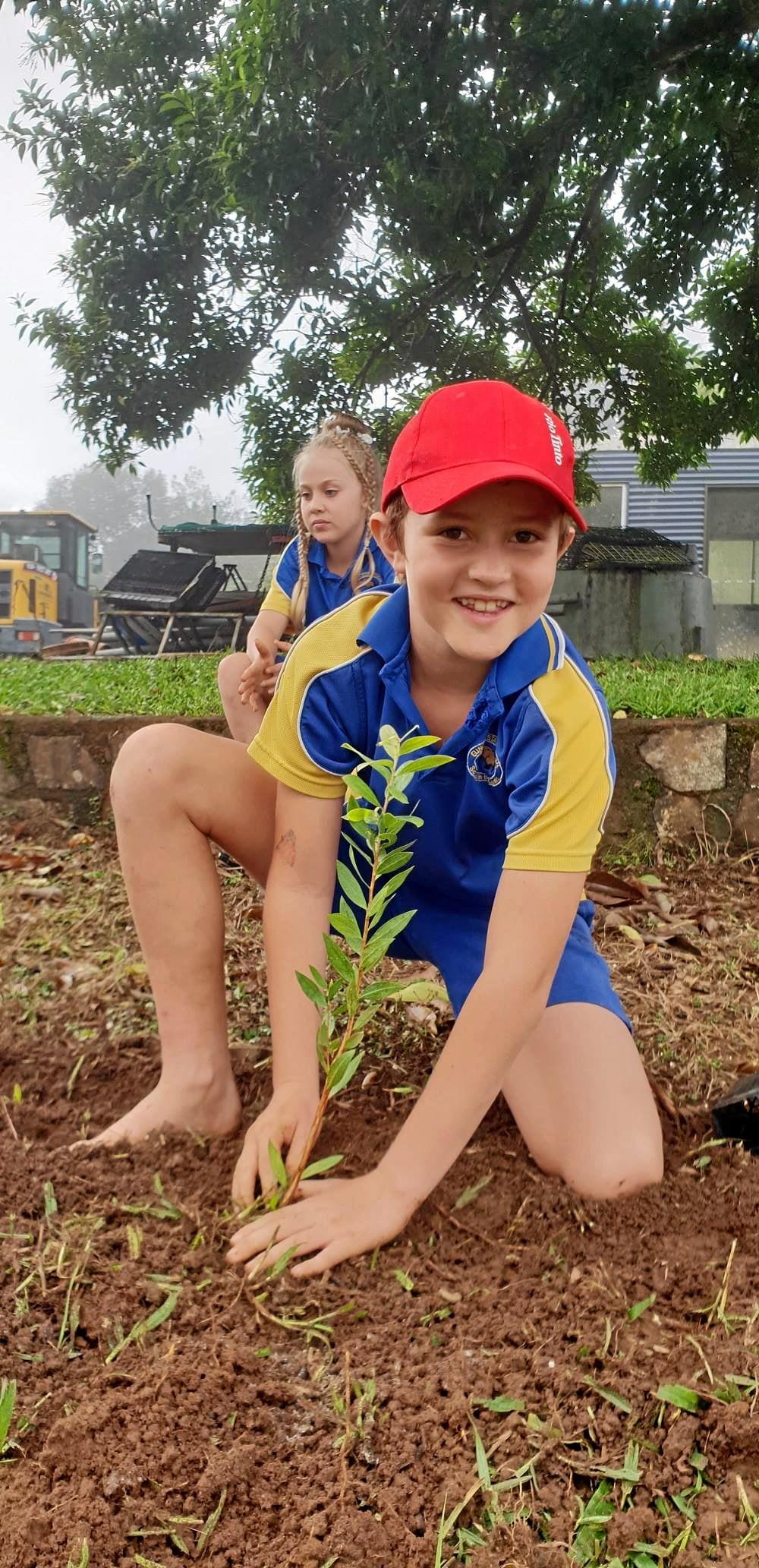 HANDS ON: Riley Grogan, 10, helps with the native tree planting at Eungella.