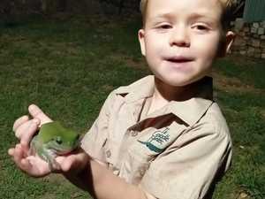 Owen Harris: Wildlife Warrior who wants to meet Robert Irwin