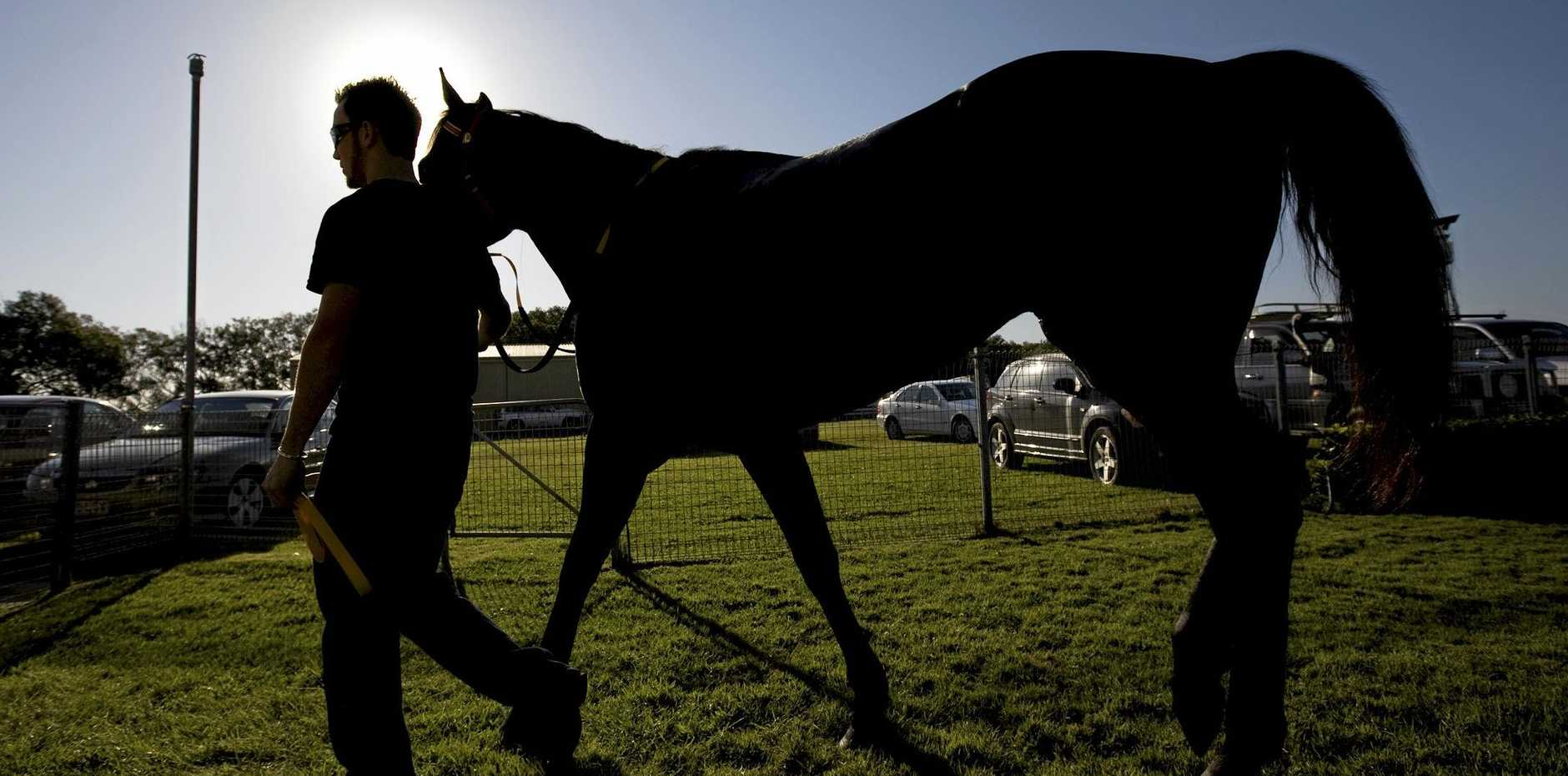 Ground-breaking research towards a vaccine, similar to what solved the deadly Hendra virus, will give the horse racing industry a weapon in its arsenal against Ross River virus.