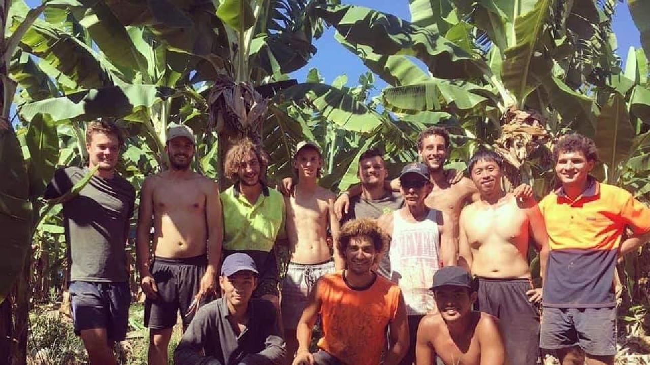 Tom Breen (third from right) at his job on the banana farm near Tully.