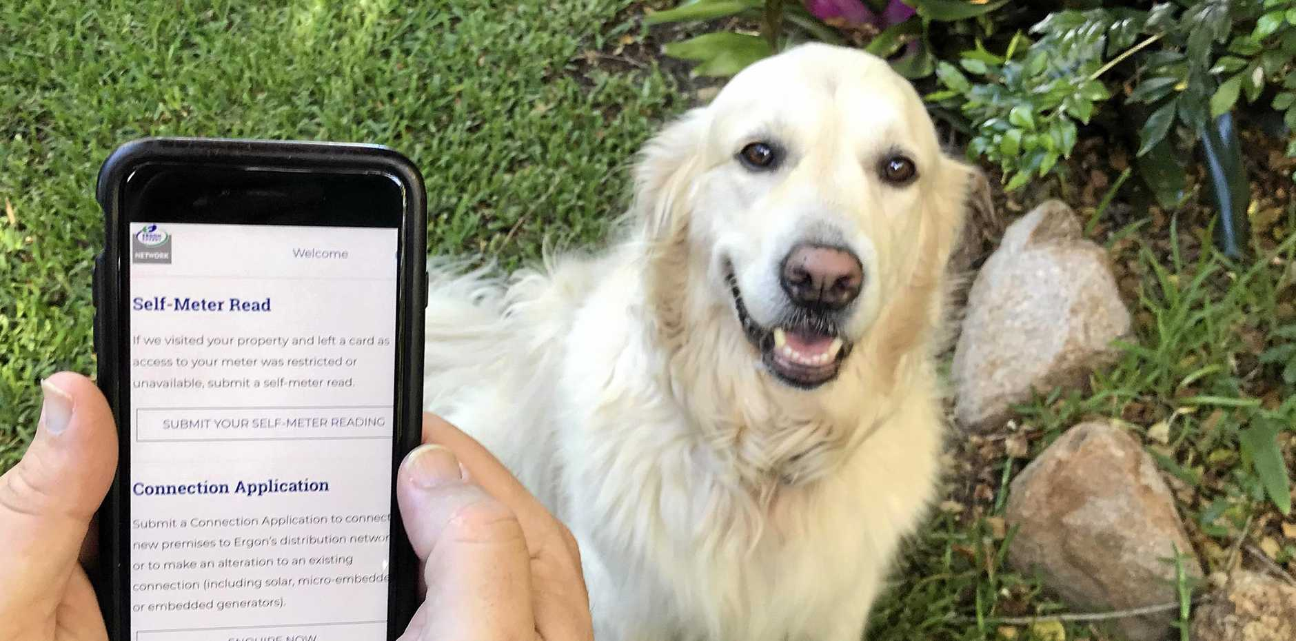 Ergon Energy's new service will benefit dog owners