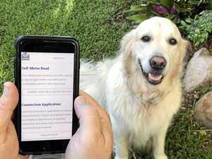 Dog bites inspire Ergon's online self-meter read service