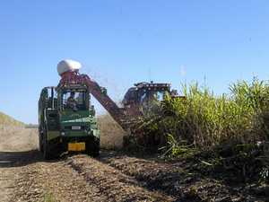 Cane growers offered help with sugar marketing