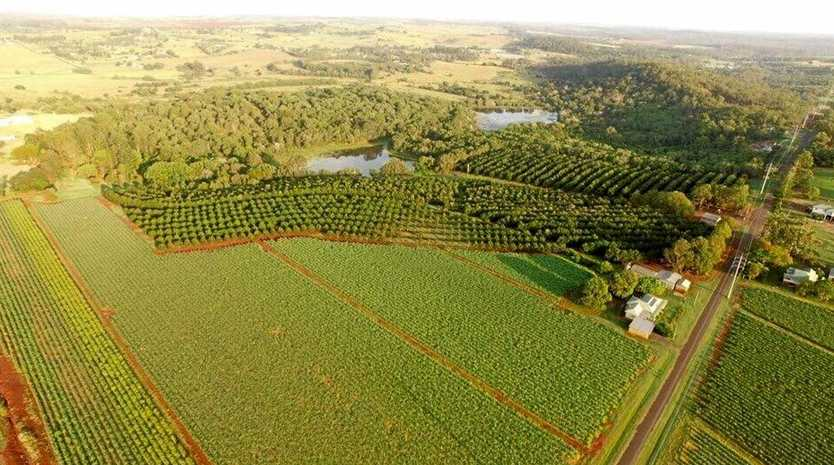 FARMING LAND: 81 Rankin Rd shares a boundary with 115 Lucketts Rd providing a rare opportunity for crop growers.