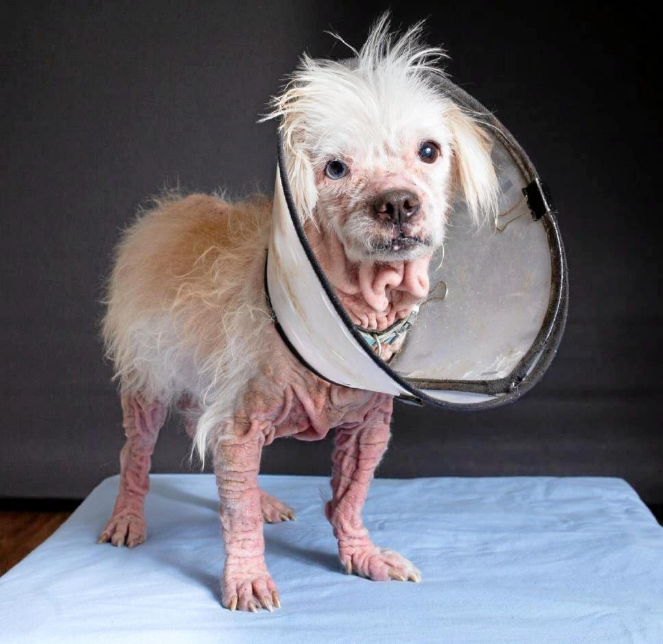 Astro suffered a serious skin condition which went untreated and needed to be euthanized.
