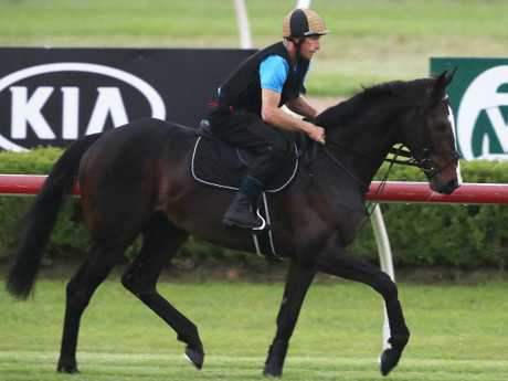 He's Eminent during a workout at Canterbury Park. Picture: Mark Evans/Getty