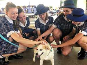 Meet Milo, Shalom's four-legged staff member