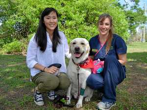 Hero golden retriever joins battle to save lives