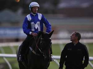 Winx lashes out, kicks sign ahead of final race