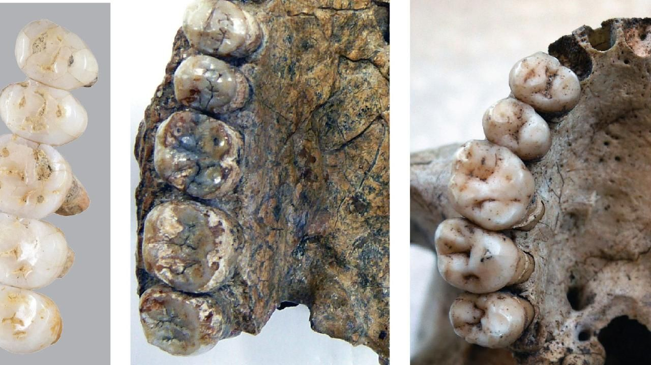 Fossil bones and teeth discovered in a cave in the Philippines reveal a previously unknown human species. Picture: Florent Detroit/AFP