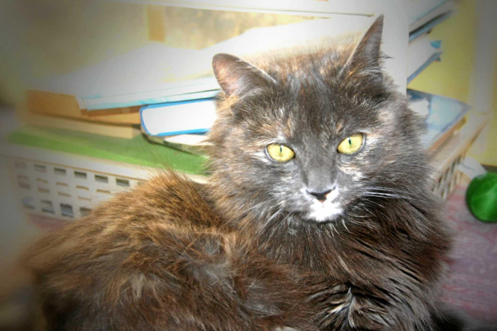 Joan Dunlop's cat Sally needs a new home.