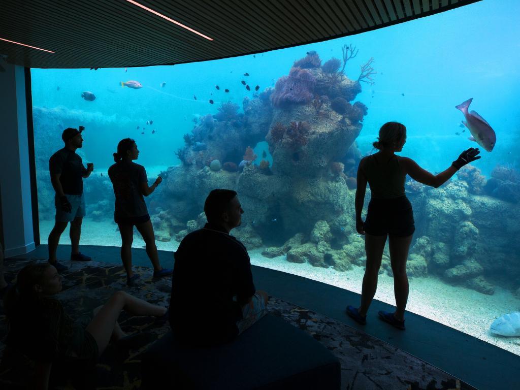 The Underwater Observatory. Picture: Lachie Millard