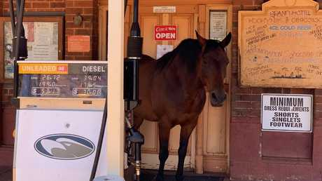 The town horse in Kookynie almost acts as a bouncer, residing just outside the pub entrance.