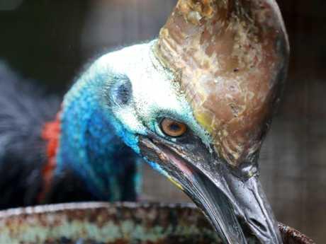 It's alleged the victim was breeding the birds.