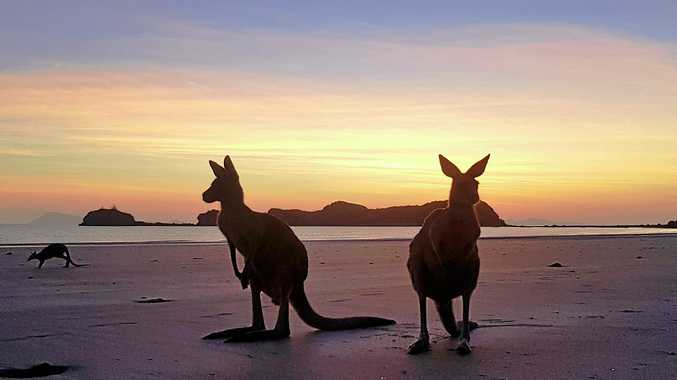 The proposal to restrict some beach access for the Cape Hillsborough wallaby feeding experience is being hotly debated.
