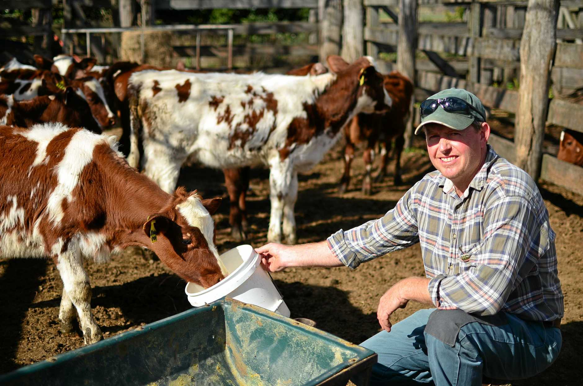 INVESTING IN THE FUTURE: The Bourke family from Gladfield have just built a new 50-cow rotary dairy a testament to their faith in the future of the sector. Pictured here is Kevin Bourke who handles calf rearing amongst other roles in the family operation. Photo Toni Somes / Warwick Daily News