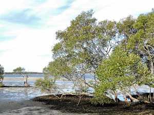 Groups help stem tide of erosion on Pumicestone Passage