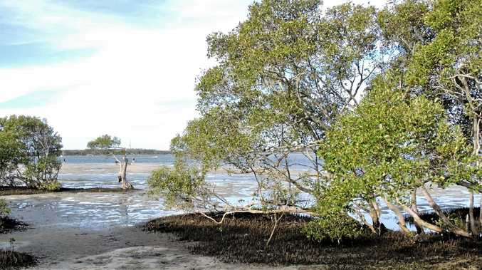 FIGHTING BACK AGAINST MOTHER NATURE: The Take Action Pumicestone Passage group has successfully planted mangroves as part of an erosion control project and now has funding to continue this work.