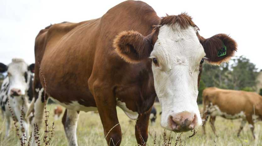 Dairy farmers have received a boost from higher milk prices.