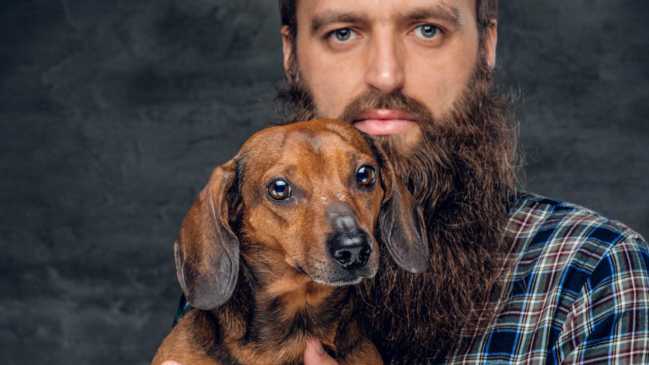 Beards themselves are not necessarily unhygienic, however poor beard care including allowing it to become a food trap, makes a dog look positively pristine.
