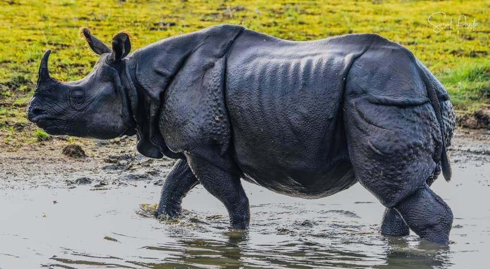 WINNING SHOT: Saroj Panta's photograph of a rhino.