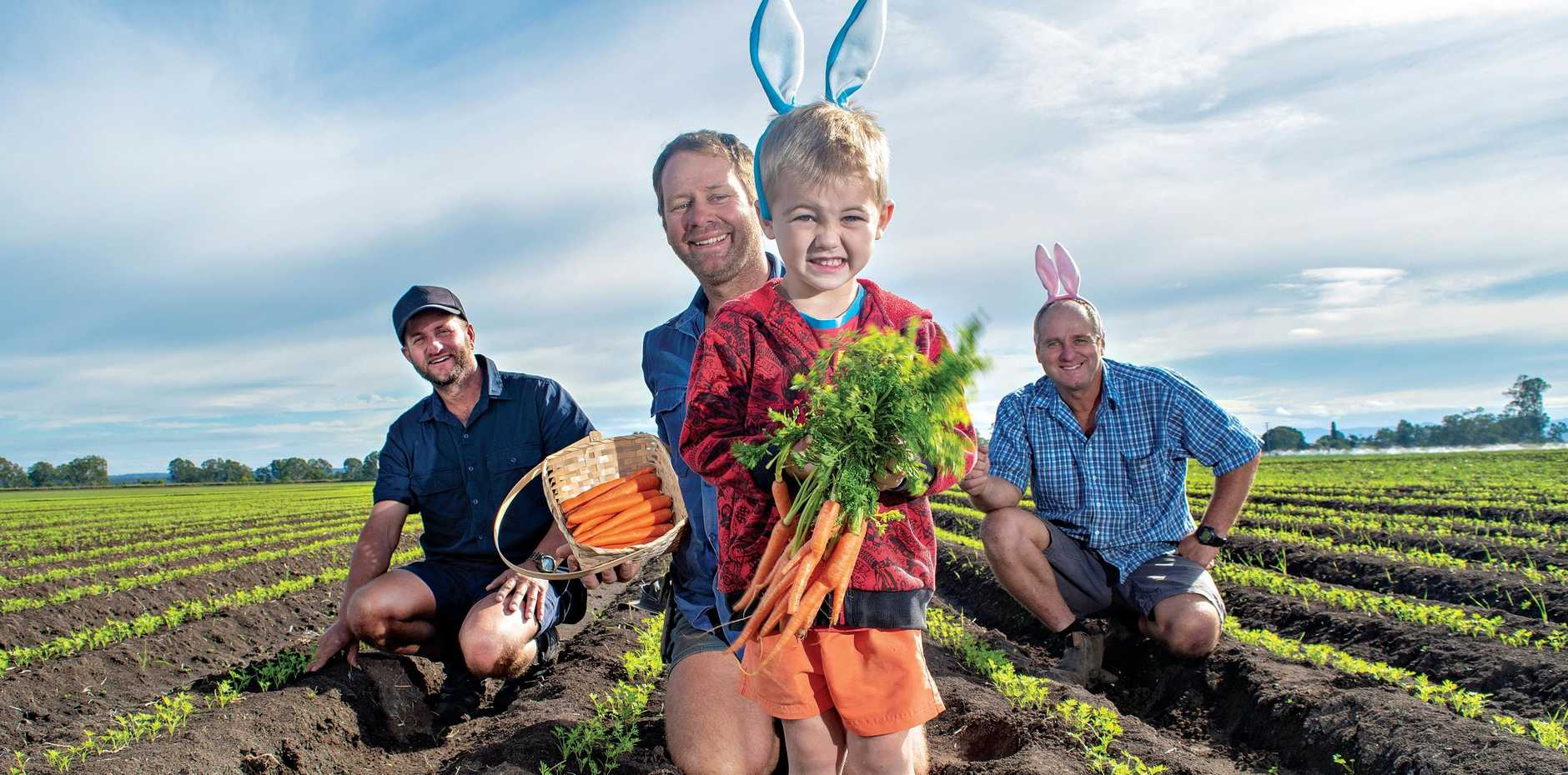 Stephen, Darren, Liam (front) and Mark Jendra, of Jendra Farms at Mount Tarampa, in their carrot field.