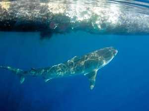 Whale carcass beach burials are 'safe'
