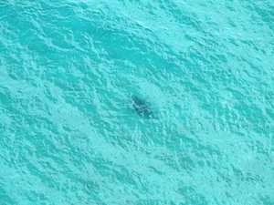 3m white shark spotted off Ballina beach