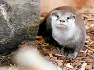Otterly adorable new residents at Rocky Zoo come out to play