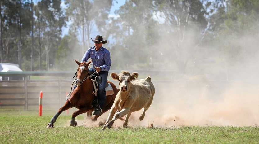 RIDING FOR A WIN: Steve Comiskey on his way to winning the restricted open draft at the 2019 Eidsvold Golden Bell Campdraft.