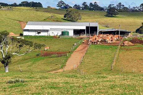 Dairy farm.