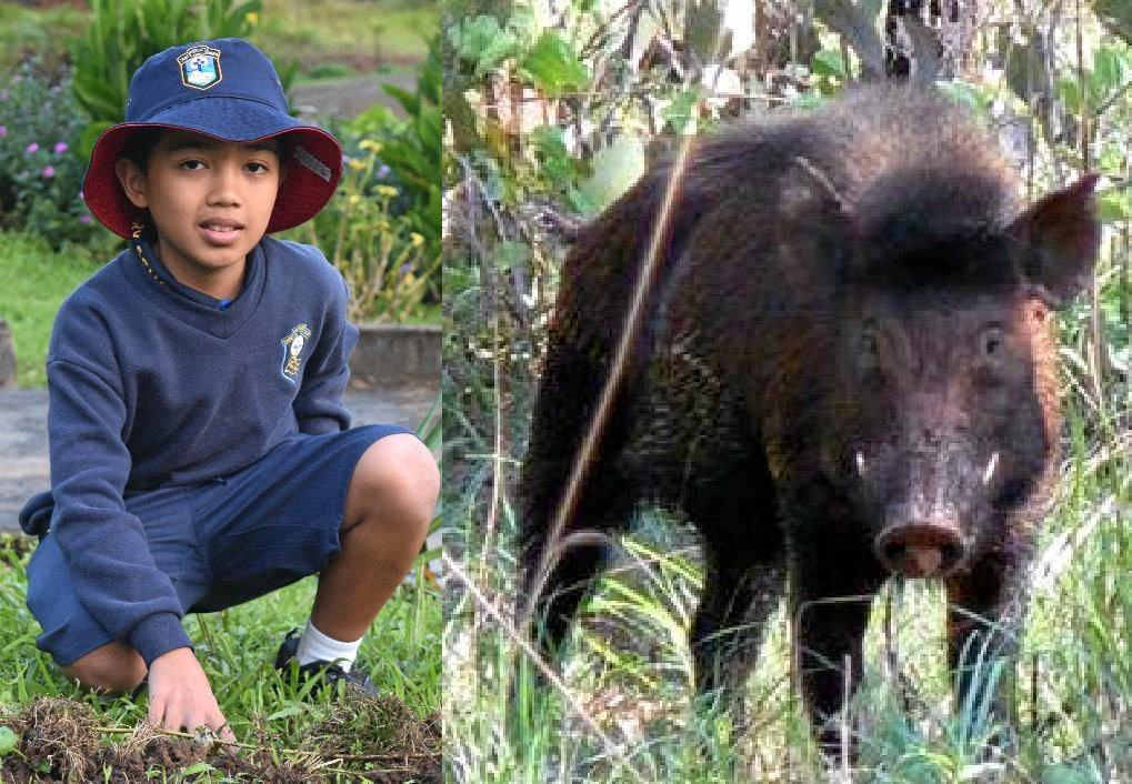 LUCKY ESCAPE: Gympie schoolboy Neil Macalisang had a terrifyingly close call with a feral pig.
