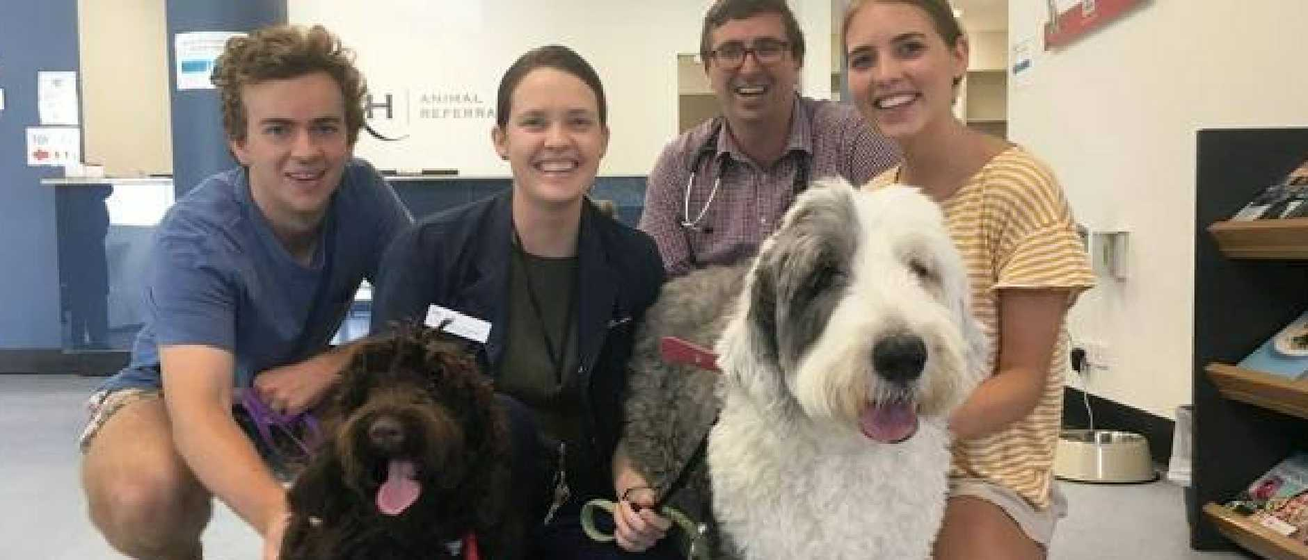 Patrick Coffey, oncology specialist Dr Kathleen O'Connell, oncology intern Dr Albert Thomas and Mya Rush with Eli and Milly at the Animal Referral Hospital at Sinnamon Park.