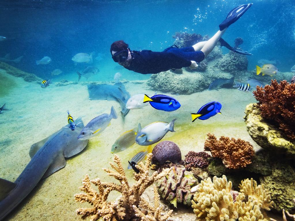 Marine biologist Johnny Gaskell swimming on the living reef in the free form coral lagoon at Daydream Island, home to over 100 species of marine fish, rays, coral and invertebrates. Picture: