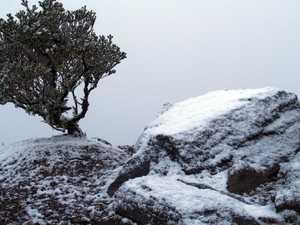 Aussies wake to historic snowfall