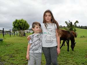 Family in mourning after chopper-spooked horse dies