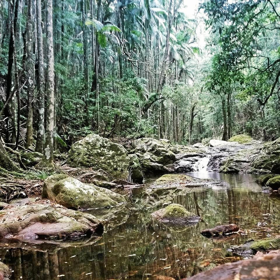 Laura Cope - Kondalilla Falls Photo Contributed