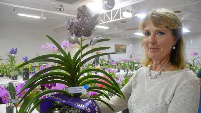 Orchids on show in Wondai