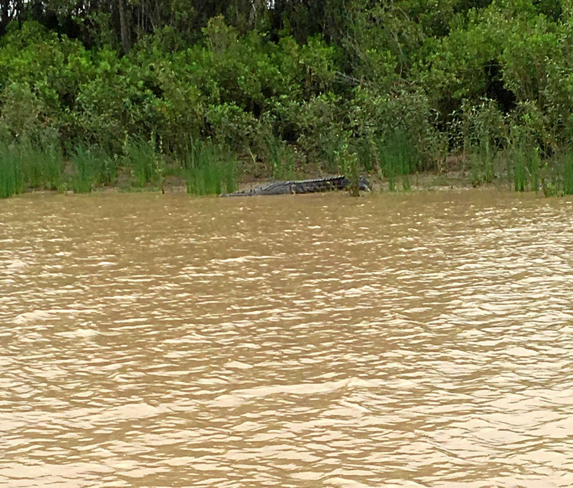 BIG FELLA: Emily Briggs was fishing on the Fitzroy River, just 1km from the Quay St boat ramp, when she spotted this crocodile.
