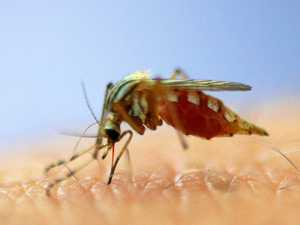 ZIKA ZONE: Mozzie virus could spread rapidly in region