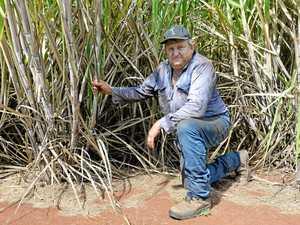 Region's farmers feel the heat of the dry season