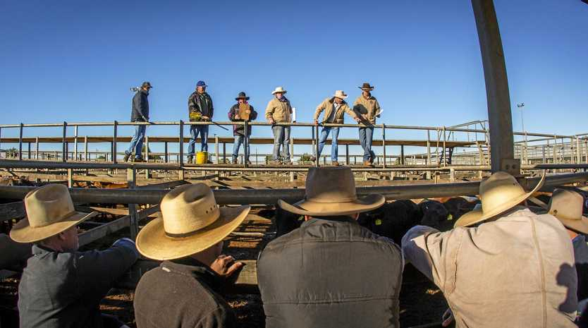 CHANGES: Prime sales at the Roma saleyards will be held fortnightly for the rest of the financial year.