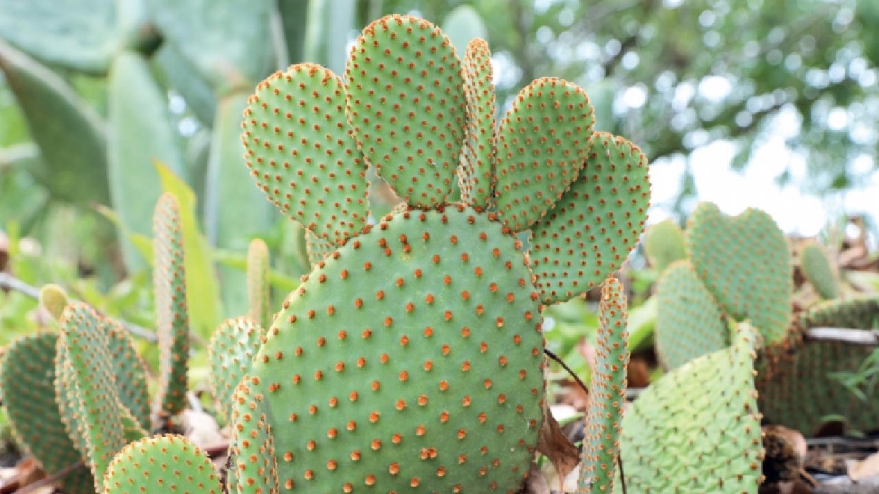 Blind Cactus